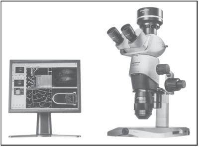 میکروسکوپ استریوسکوپ